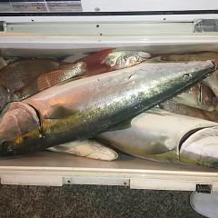 11月 27日(水) 午後便・ウタセ真鯛の写真その10