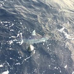 11月 27日(水) 午後便・ウタセ真鯛の写真その12