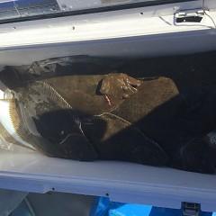 11月 29日(金) 午前便・ヒラメ釣りの写真その1
