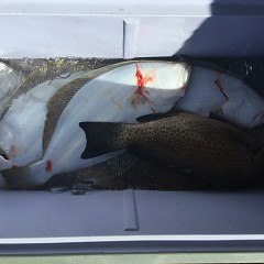 11月 29日(金) 午前便・ヒラメ釣りの写真その5