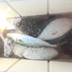 12月 1日(日) 午前便・午後便・ヒラメ釣りの写真その3