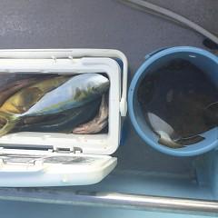 12月 1日(日) 午前便・午後便・ヒラメ釣りの写真その6