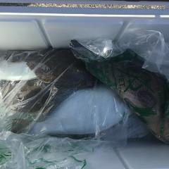 12月 5日(木) 午前便・ヒラメ釣りの写真その1