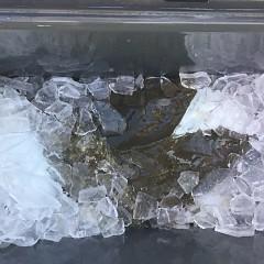12月 5日(木) 午前便・ヒラメ釣りの写真その3
