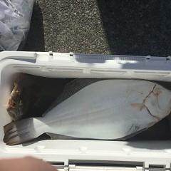 12月 5日(木) 午前便・ヒラメ釣りの写真その4