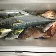 12月 5日(木) 午後便・ウタセ真鯛の写真その1