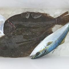 12月 6日(金) 午前便・ヒラメ釣りの写真その4