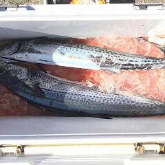12月 15日(日) 午前便・ヒラメ釣りの写真その5