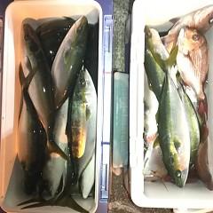 12月 15日(日) 午後便・ウタセ真鯛の写真その8