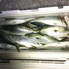 12月 15日(日) 午後便・ウタセ真鯛の写真その9