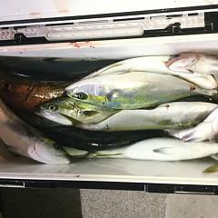 12月 15日(日) 午後便・ウタセ真鯛の写真その10