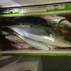 12月 15日(日) 午後便・ウタセ真鯛の写真その12