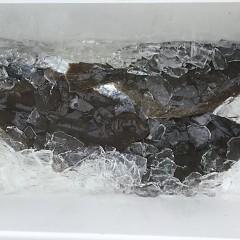 12月 26日(木) 午前便・ヒラメ釣りの写真その5