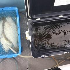 12月 26日(木) 午前便・ヒラメ釣りの写真その6