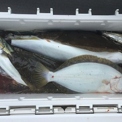 12月 26日(木) 午前便・ヒラメ釣りの写真その7