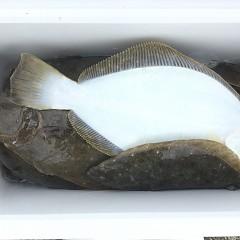 12月 26日(木) 午前便・ヒラメ釣りの写真その9