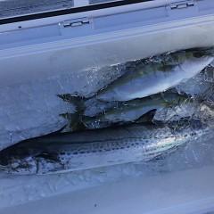 12月 27日(金) 午前便・ヒラメ釣りの写真その6