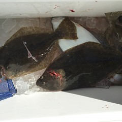 12月 29日(日) 午前・午後・ヒラメ釣りの写真その3