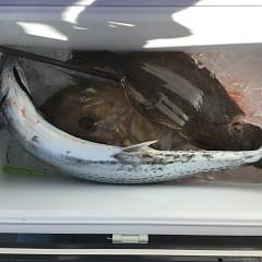 12月 29日(日) 午前・午後・ヒラメ釣りの写真その5