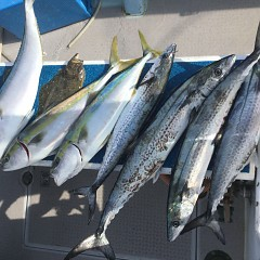 1月 14日(火) 午前便・ヒラメ釣りの写真その3