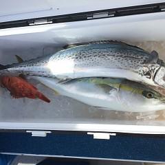 1月 18日(土) 午前・午後・ヒラメ釣りの写真その5