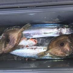 1月 18日(土) 午前・午後・ヒラメ釣りの写真その8