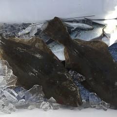 1月 30日(木) 午前便・ヒラメ釣りの写真その3