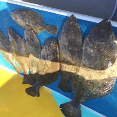 1月 31日(金) 午前・ヒラメ釣り 午後・アジ釣りの写真その1