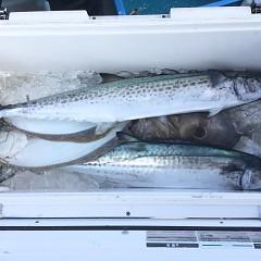 2月 12日(水) 午前便・ヒラメ釣りの写真その12
