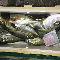 2月 19日(水) 午後便・アジ釣りの写真その4