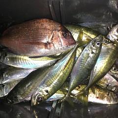 2月 20日(木) 午前便・ヒラメ釣り 午後便・アジ釣りの写真その4