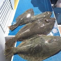 2月 24日(月) 午前便・ヒラメ釣りの写真その7
