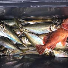 3月 27日(金) 7時出船・アジ釣りの写真その3