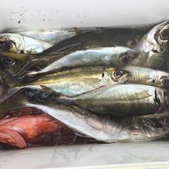 3月 27日(金) 7時出船・アジ釣りの写真その4