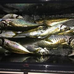 4月 8日(水) 午前・午後・アジ釣りの写真その5