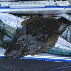 4月15日(水)午後便・アジ釣りの写真その2