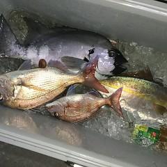 5月 8日(金) 午後便・ウタセ真鯛の写真その1