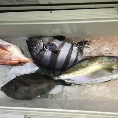 5月 8日(金) 午後便・ウタセ真鯛の写真その2