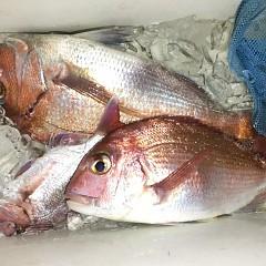 5月 8日(金) 午後便・ウタセ真鯛の写真その3