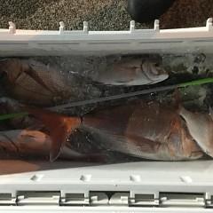 5月 24日(日) 午後便・ウタセ真鯛の写真その1