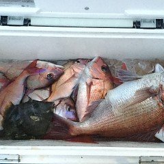 5月31日(日)午後便・ウタセ真鯛釣りの写真その5