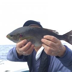 6月 24日(水) 午前・午後・イサキ、アジ釣りの写真その6