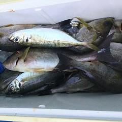 6月 24日(水) 午前・午後・イサキ、アジ釣りの写真その7