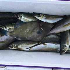 6月 24日(水) 午前・午後・イサキ、アジ釣りの写真その9