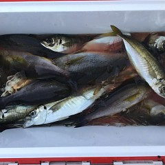 6月 24日(水) 午前・午後・イサキ、アジ釣りの写真その10
