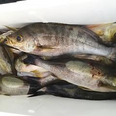 6月 26日(金) 午前・午後・イサキ釣りの写真その3