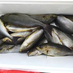 6月 26日(金) 午前・午後・イサキ釣りの写真その4