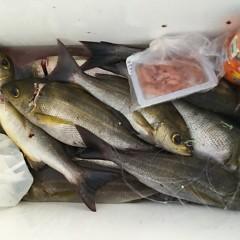 6月 26日(金) 午前・午後・イサキ釣りの写真その5