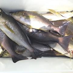 6月 27日(土) 午前、午後・イサキ釣りの写真その10