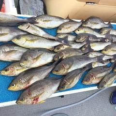 6月 28日(日) 午前、午後・イサキ釣りの写真その1